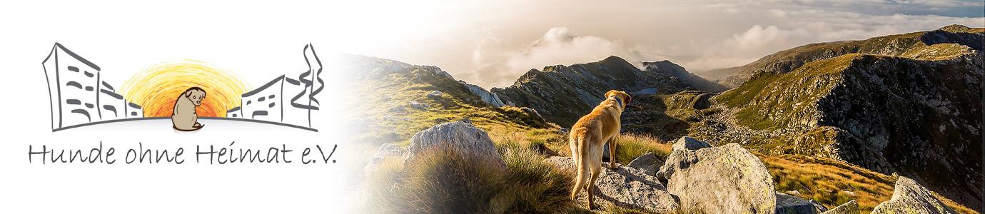 Hunde ohne Heimat e. V. - Neuigkeiten rund um unsere Hunde aus dem Tierschutz!