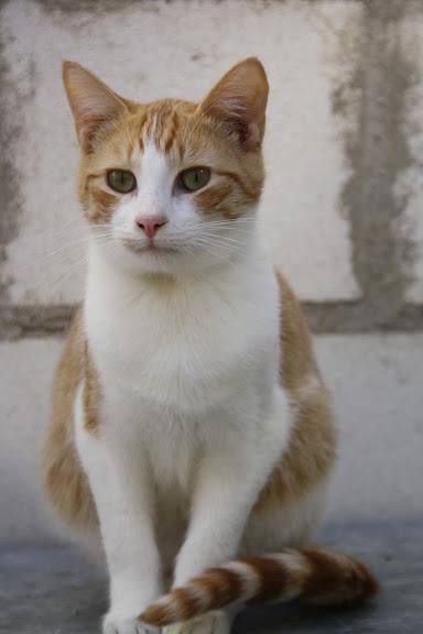 Oliver4