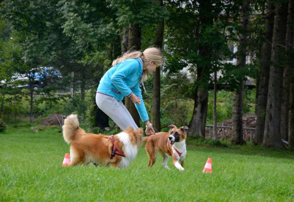 Lassie1neu